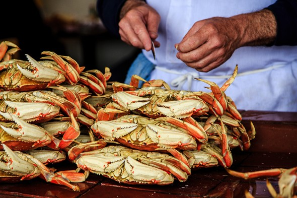 crab_picking_1024